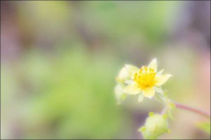 Yellow flower in sharp focus against a lovely blurred background