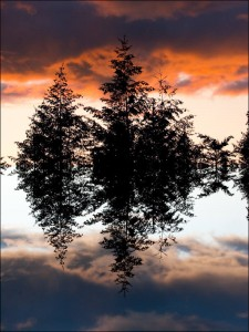 surreal picture of sky, trees, and sky
