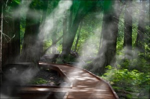 Boardwalk path through trees, mist, and rays of sunshine
